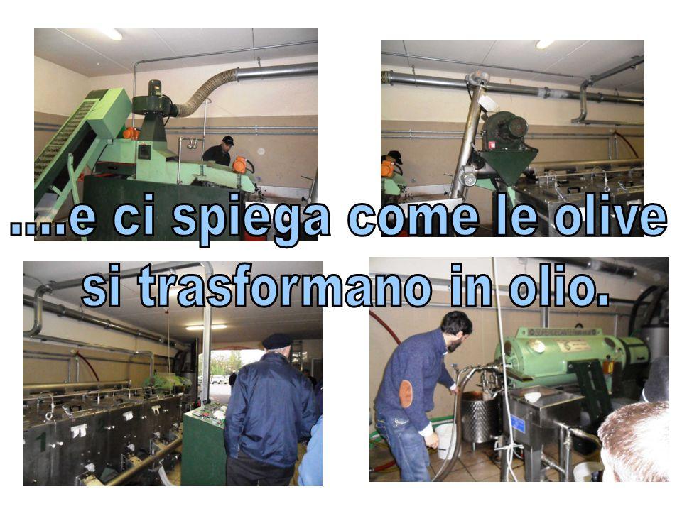 ....e ci spiega come le olive