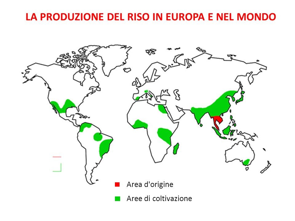LA PRODUZIONE DEL RISO IN EUROPA E NEL MONDO