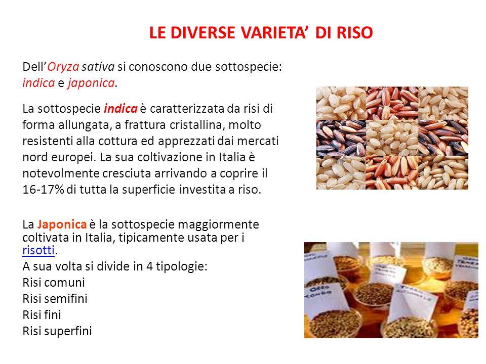 LE DIVERSE VARIETA' DI RISO