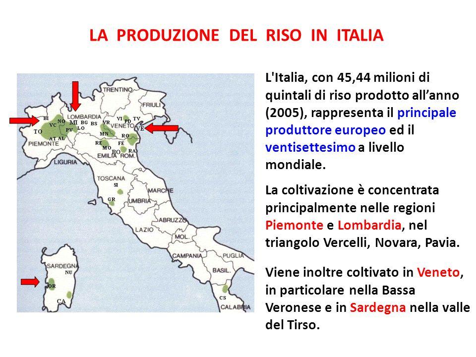 LA PRODUZIONE DEL RISO IN ITALIA