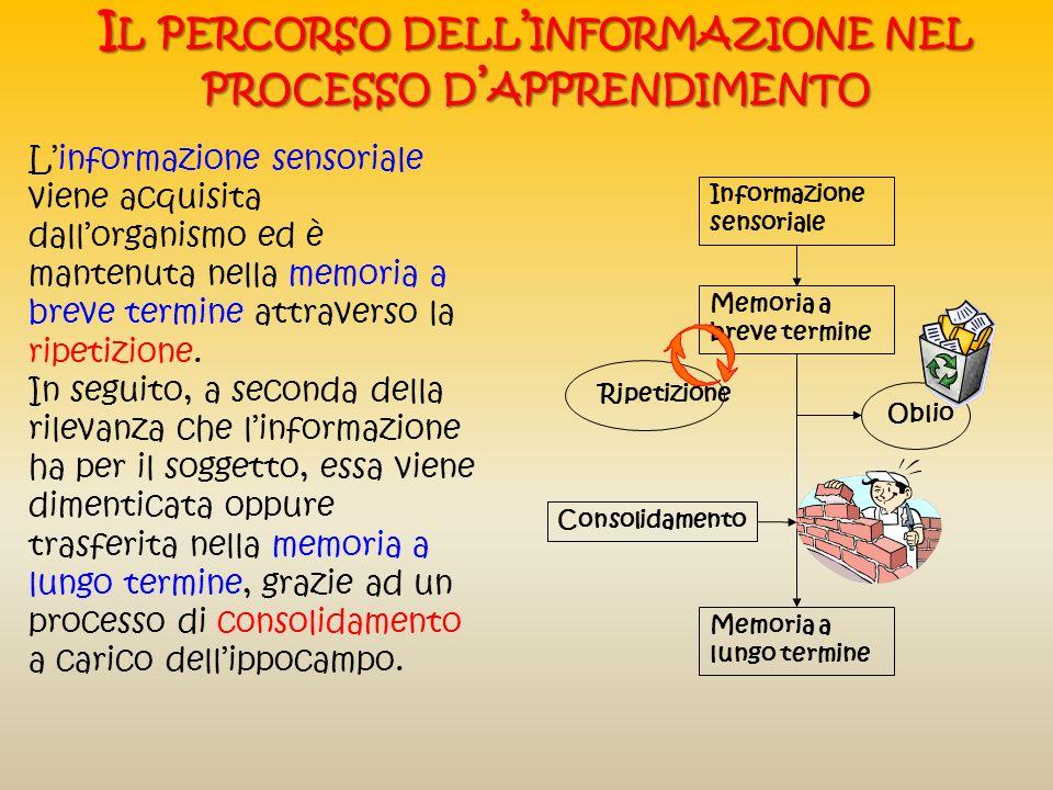 Il percorso dell'informazione nel processo d'apprendimento
