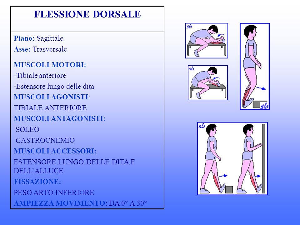 FLESSIONE DORSALE Piano: Sagittale Asse: Trasversale MUSCOLI MOTORI: