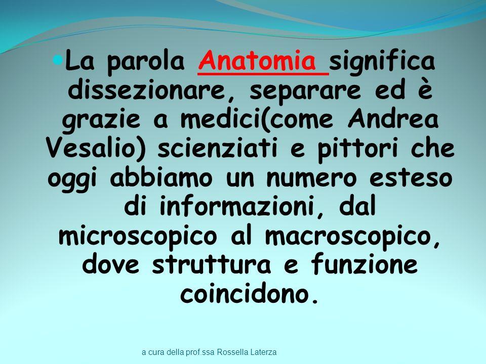 La parola Anatomia significa dissezionare, separare ed è grazie a medici(come Andrea Vesalio) scienziati e pittori che oggi abbiamo un numero esteso di informazioni, dal microscopico al macroscopico, dove struttura e funzione coincidono.