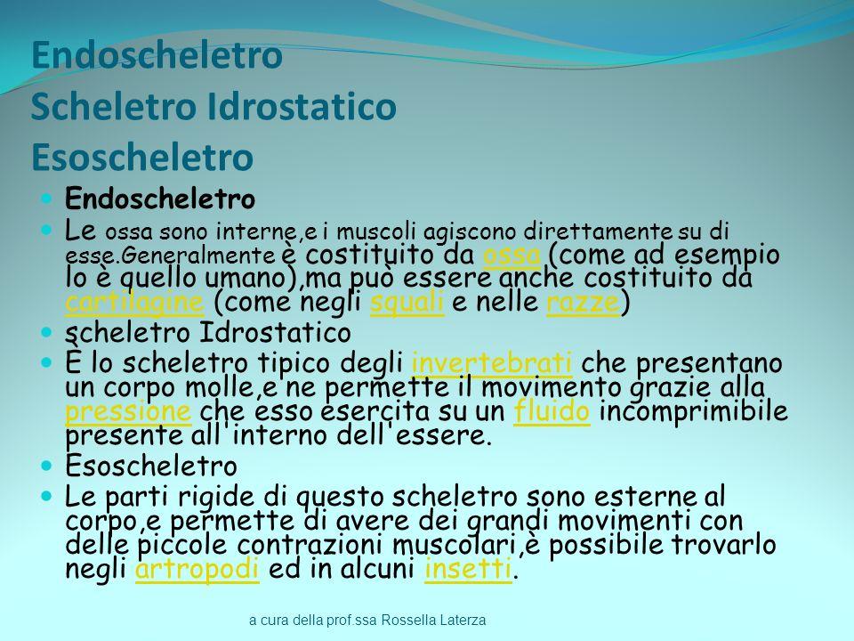 Endoscheletro Scheletro Idrostatico Esoscheletro