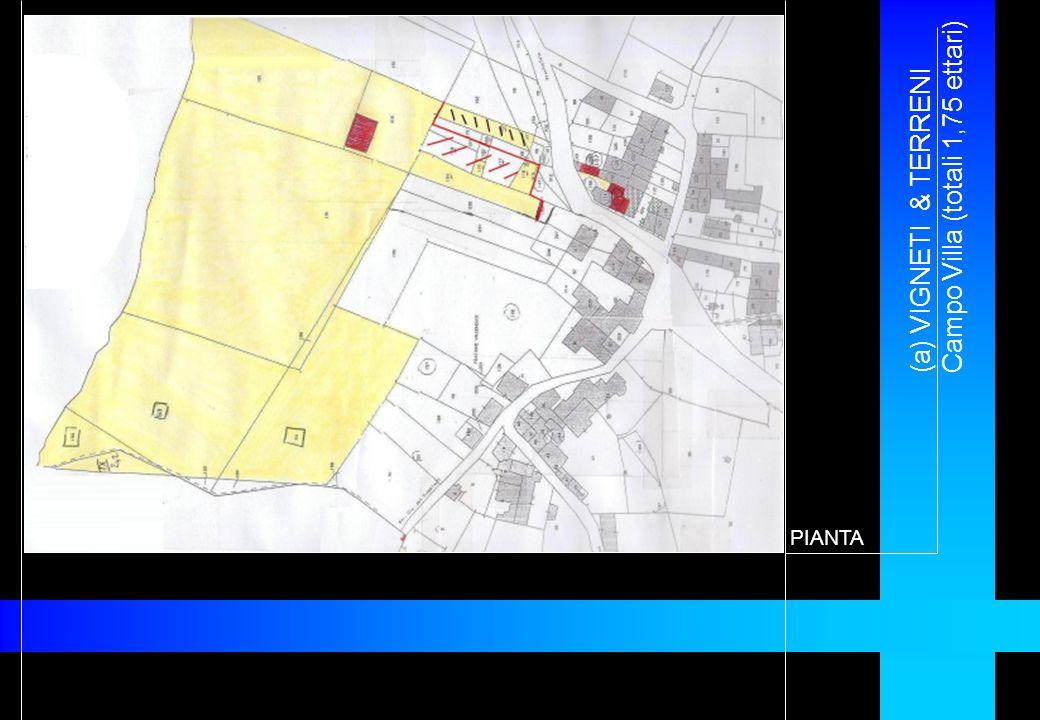 (a) VIGNETI & TERRENI Campo Villa (totali 1,75 ettari)