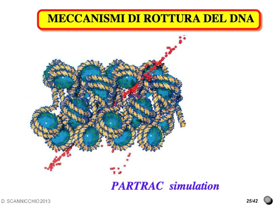 D. SCANNICCHIO 2013 25/42