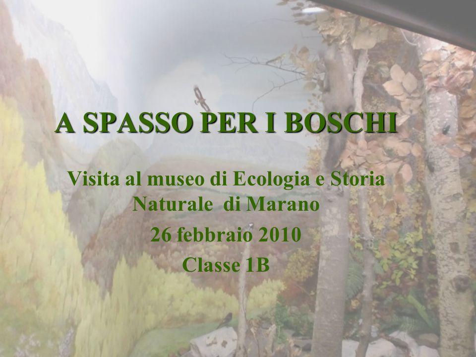 Visita al museo di Ecologia e Storia Naturale di Marano