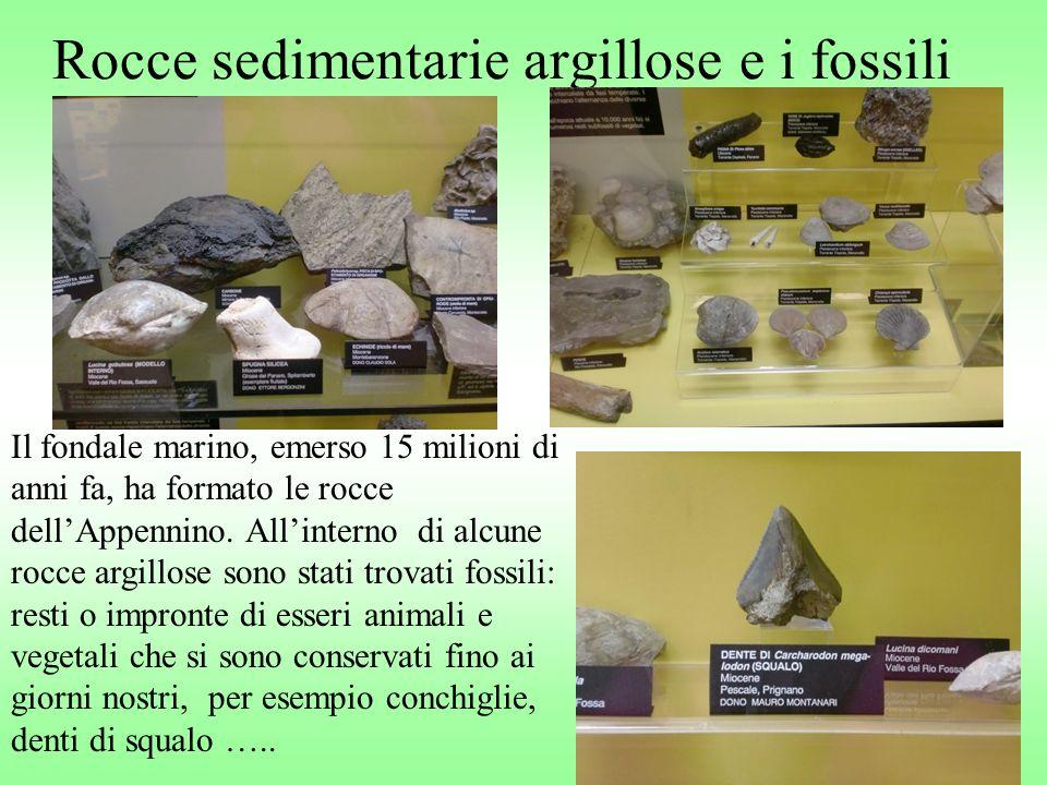 Rocce sedimentarie argillose e i fossili