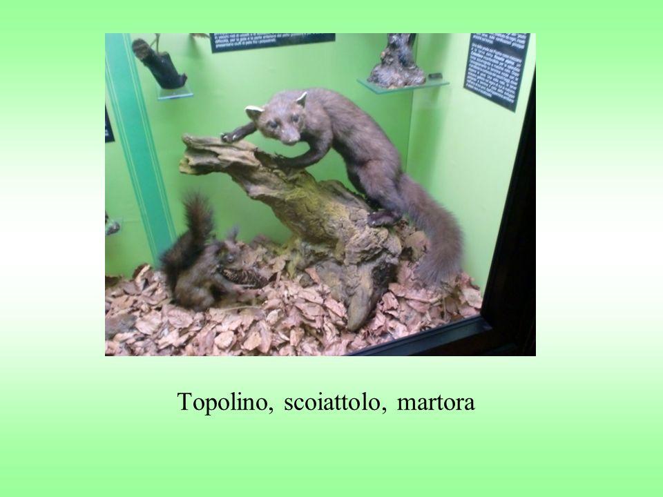Topolino, scoiattolo, martora