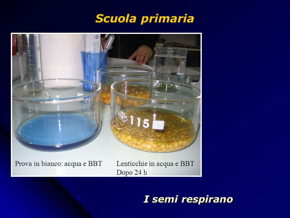 Scuola primaria I semi respirano Prova in bianco: acqua e BBT
