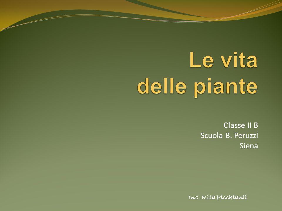 Classe II B Scuola B. Peruzzi Siena