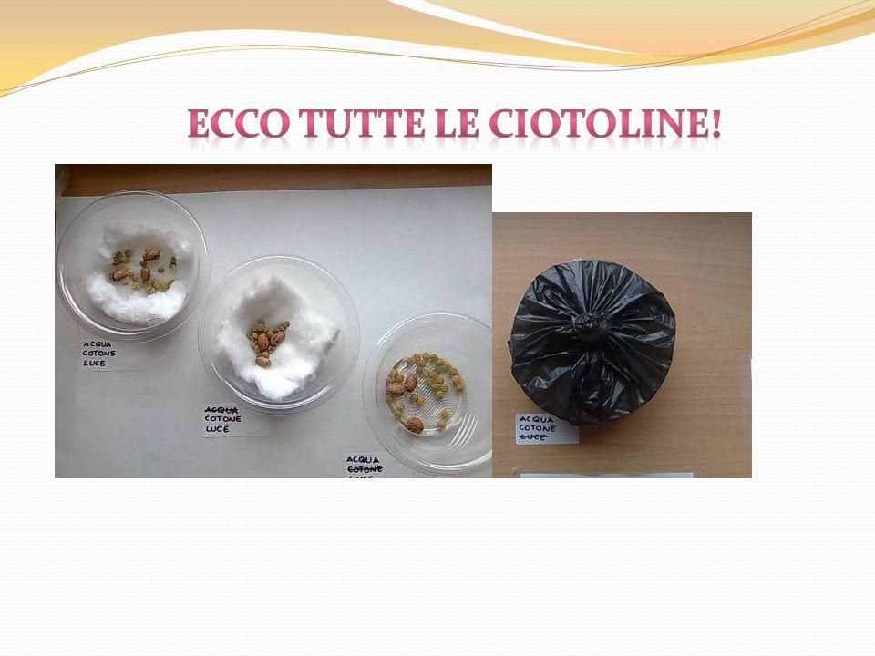ECCO TUTTE LE CIOTOLINE!
