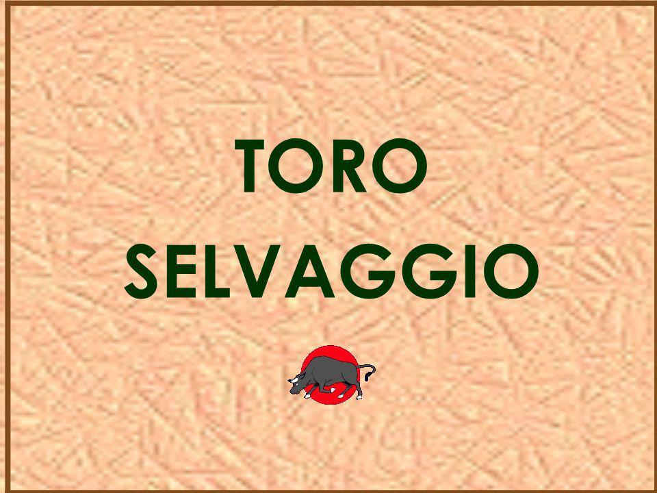 TORO SELVAGGIO