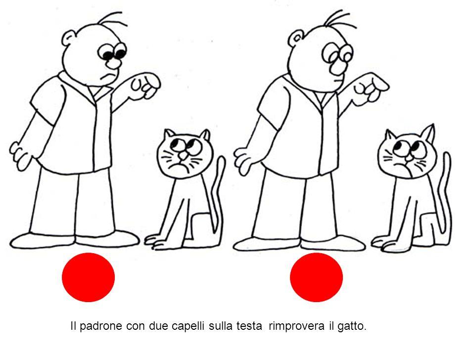 Il padrone con due capelli sulla testa rimprovera il gatto.