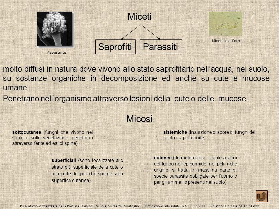 Miceti Saprofiti Parassiti Micosi