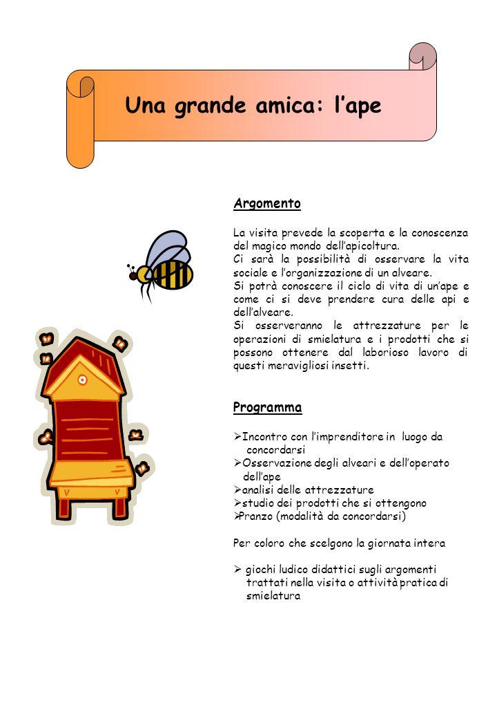 Una grande amica: l'ape