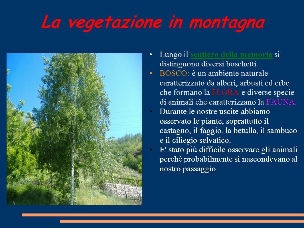 La vegetazione in montagna