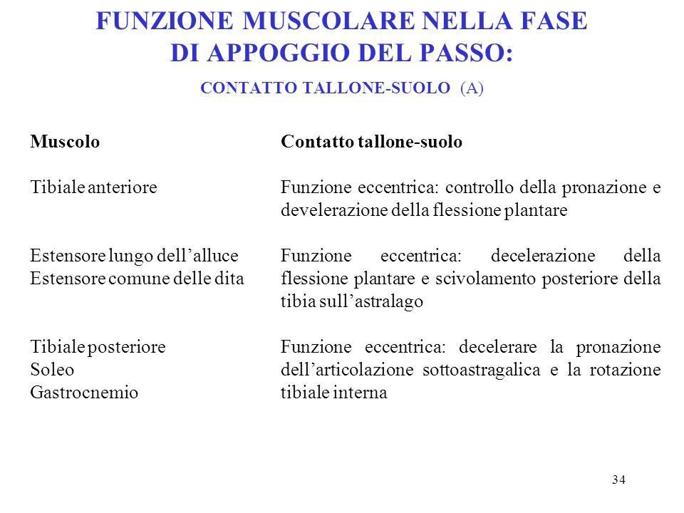 FUNZIONE MUSCOLARE NELLA FASE DI APPOGGIO DEL PASSO: CONTATTO TALLONE-SUOLO (A)