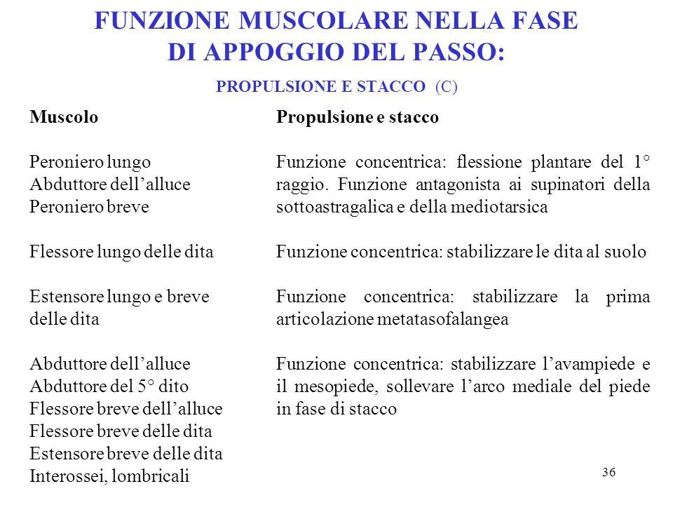 FUNZIONE MUSCOLARE NELLA FASE DI APPOGGIO DEL PASSO: PROPULSIONE E STACCO (C)