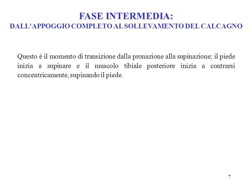 FASE INTERMEDIA: DALL APPOGGIO COMPLETO AL SOLLEVAMENTO DEL CALCAGNO