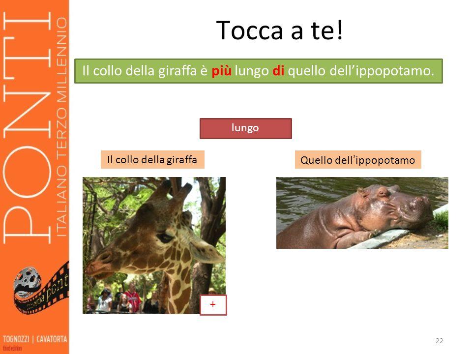 Tocca a te! Il collo della giraffa è più lungo di quello dell'ippopotamo. lungo. Il collo della giraffa.