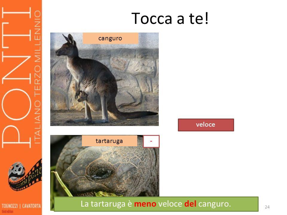 La tartaruga è meno veloce del canguro.