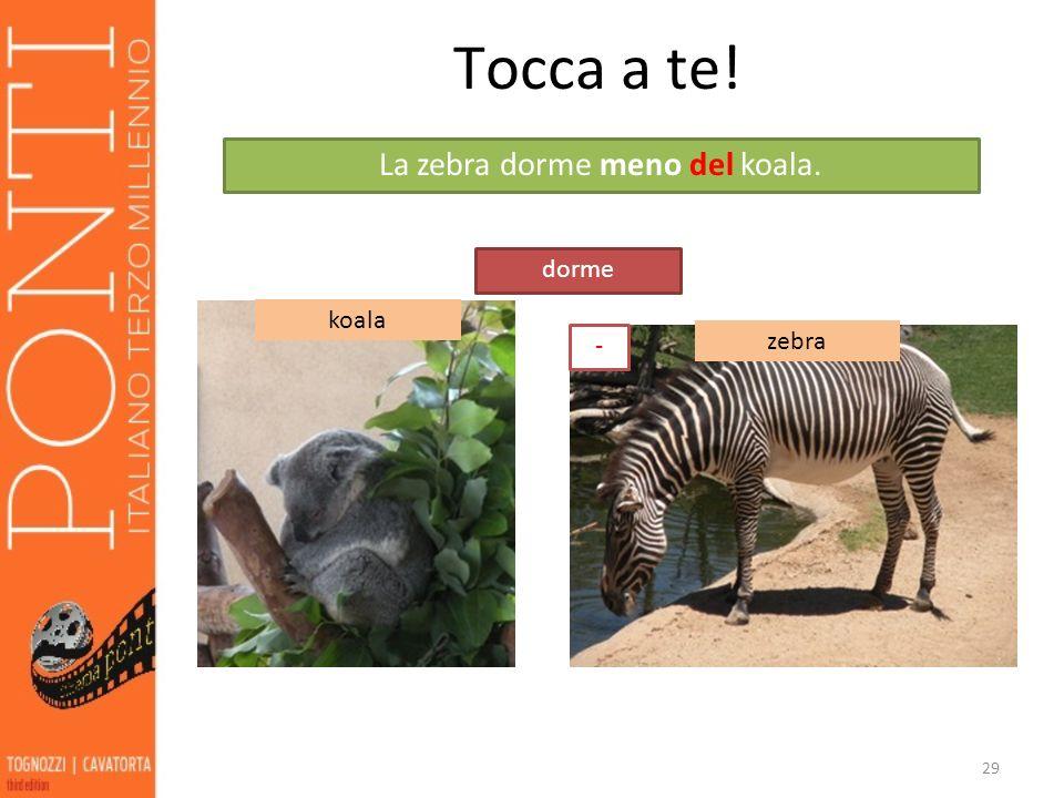 La zebra dorme meno del koala.
