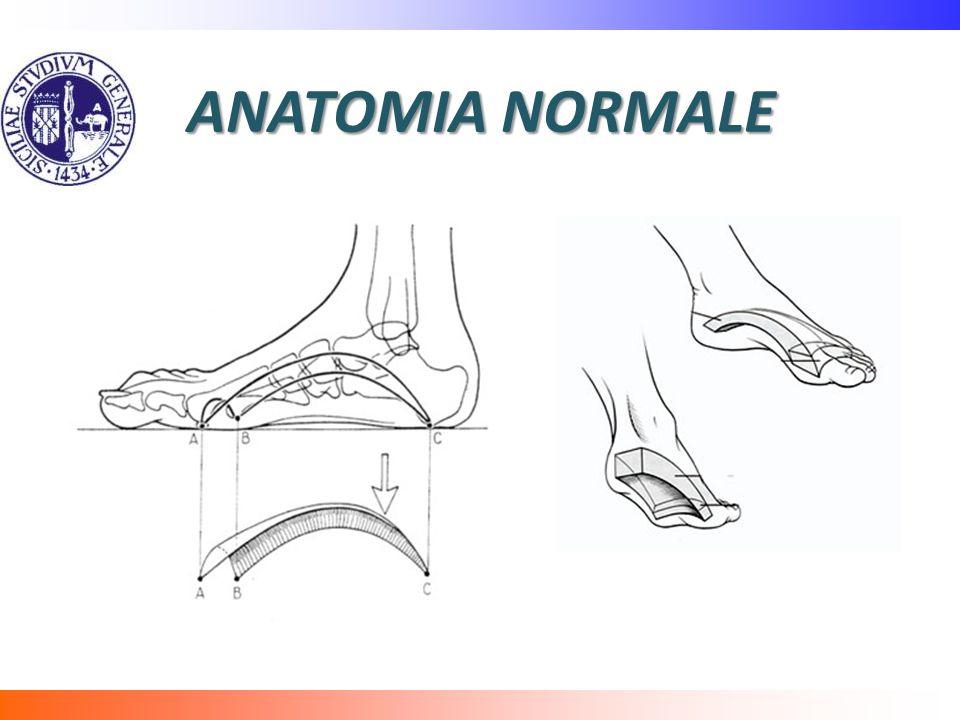 ANATOMIA NORMALE
