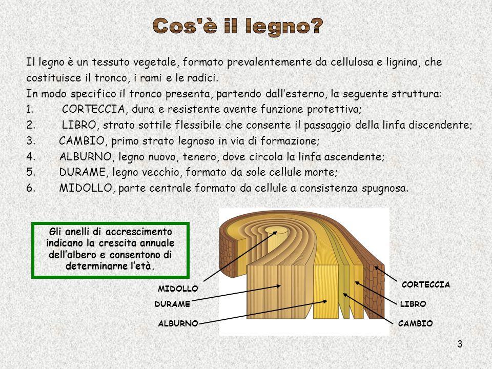Cos è il legno Il legno è un tessuto vegetale, formato prevalentemente da cellulosa e lignina, che.
