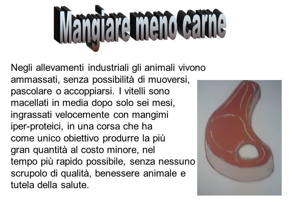 Mangiare meno carne Negli allevamenti industriali gli animali vivono