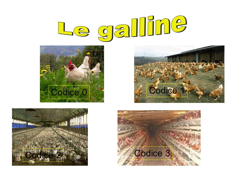 Le galline Codice 1 Codice 0 Codice 3 Codice 2
