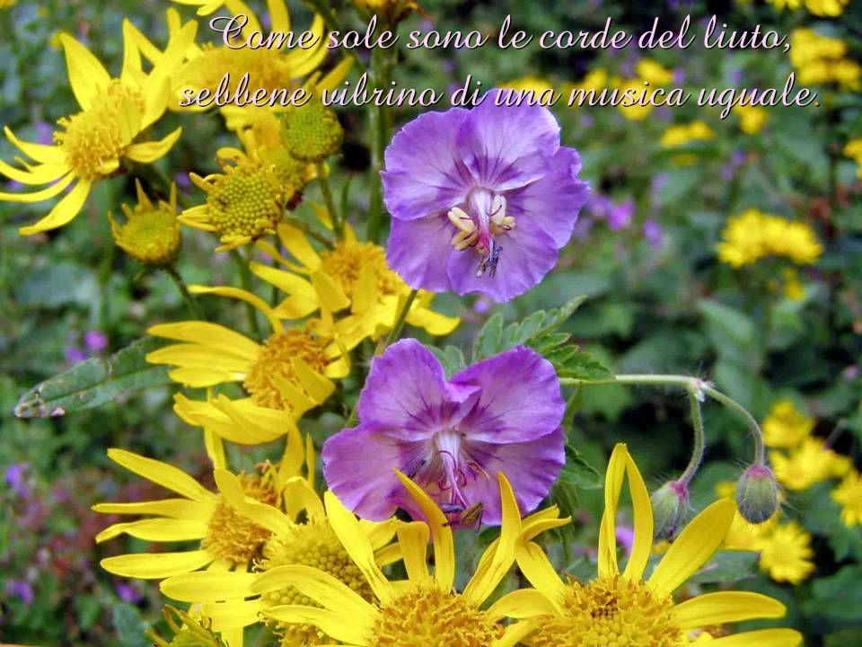 Come sole sono le corde del liuto, sebbene vibrino di una musica uguale.