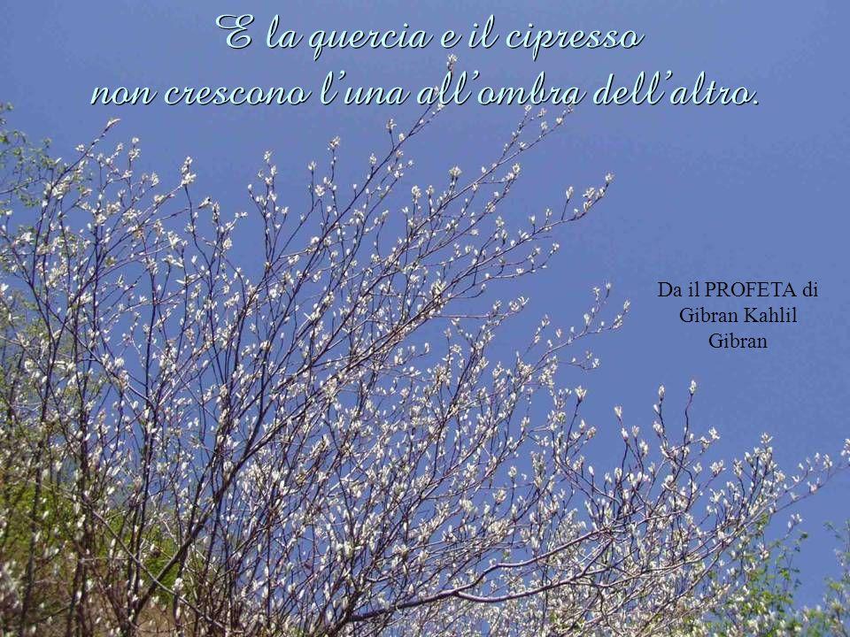 E la quercia e il cipresso non crescono l'una all'ombra dell'altro.