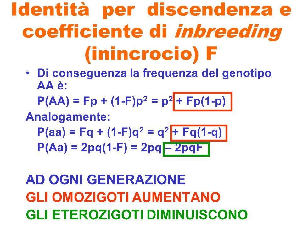 Identità per discendenza e coefficiente di inbreeding (inincrocio) F