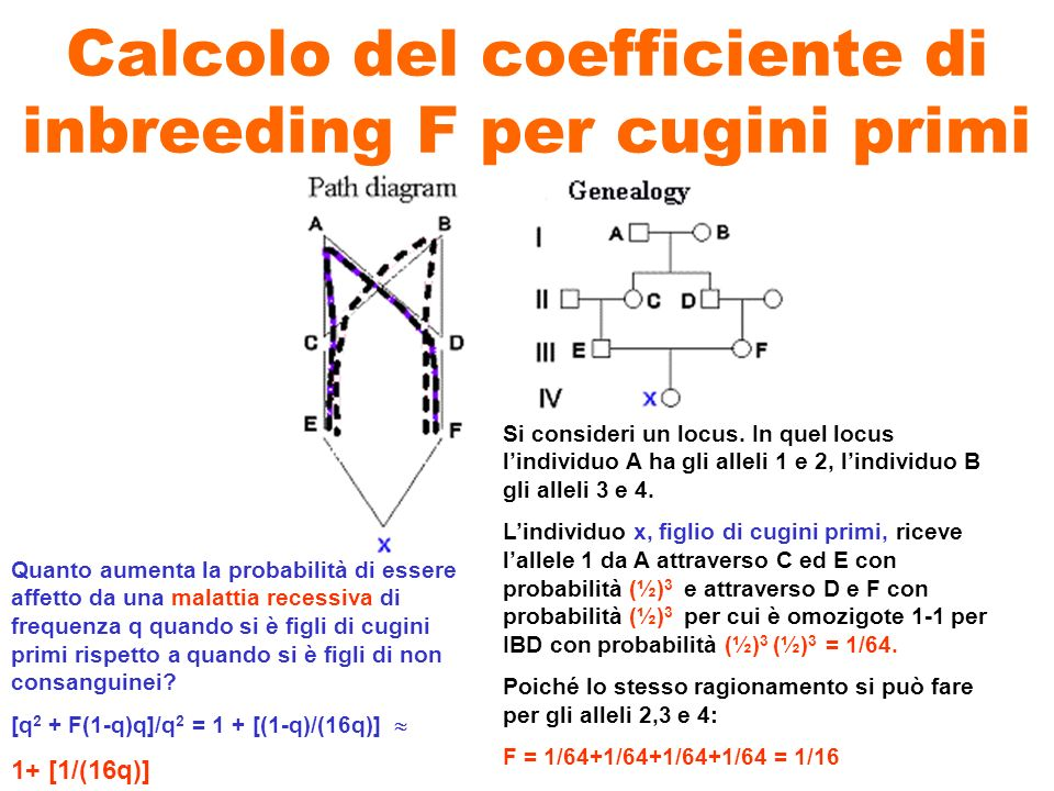 Calcolo del coefficiente di inbreeding F per cugini primi