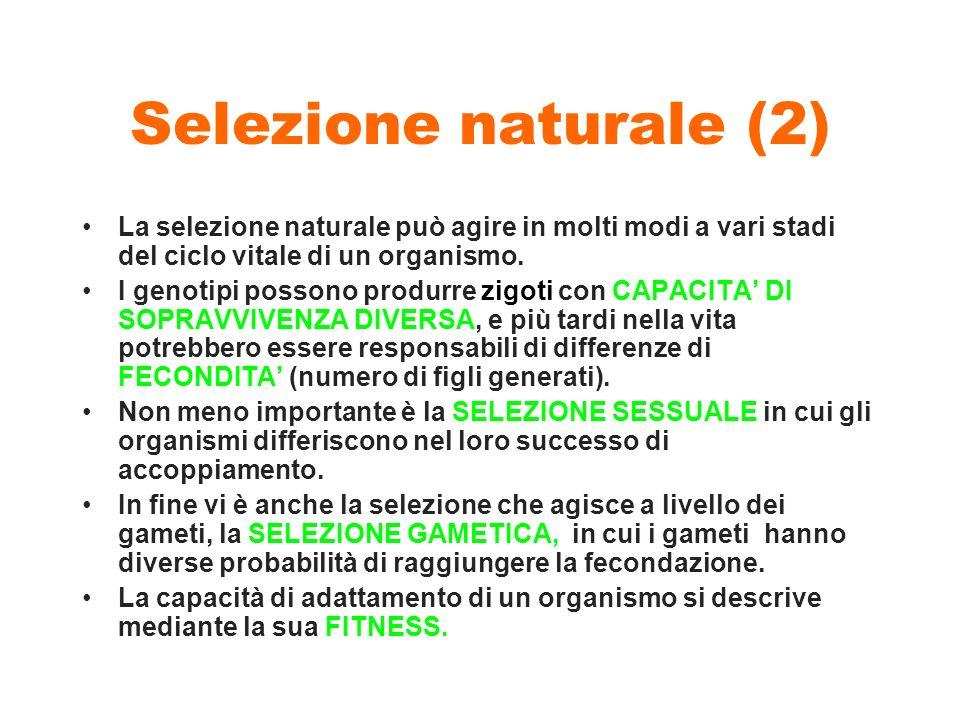 Selezione naturale (2) La selezione naturale può agire in molti modi a vari stadi del ciclo vitale di un organismo.