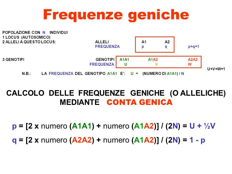CALCOLO DELLE FREQUENZE GENICHE (O ALLELICHE) MEDIANTE CONTA GENICA