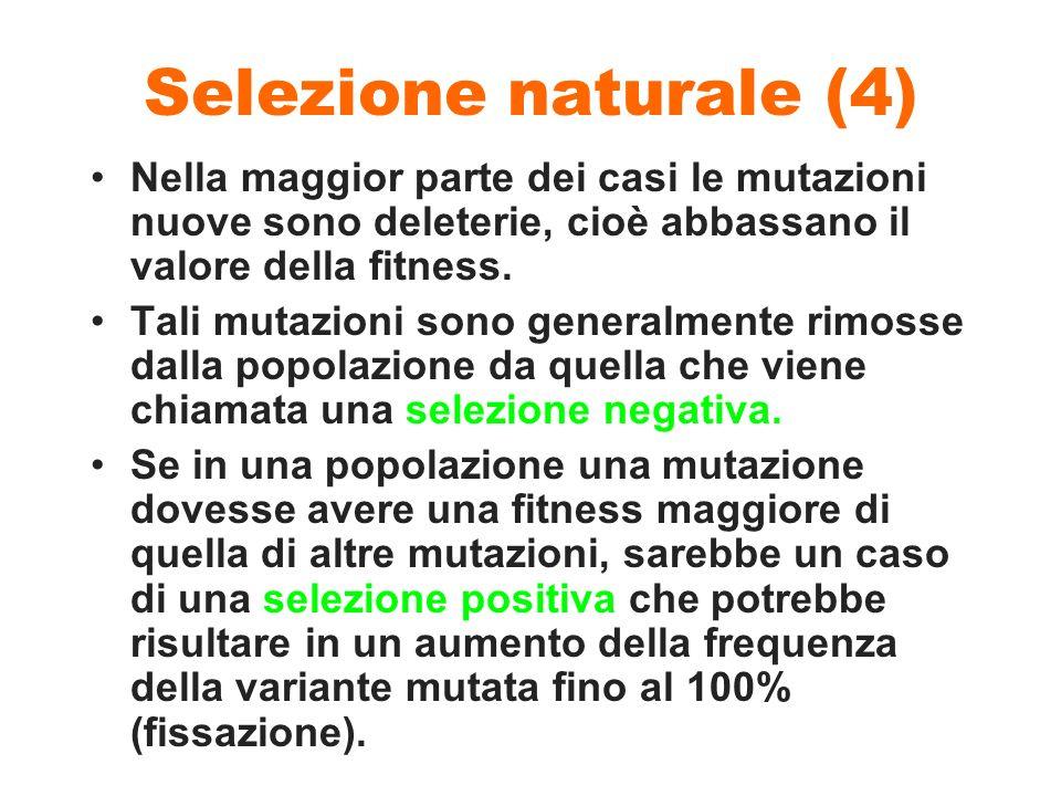Selezione naturale (4) Nella maggior parte dei casi le mutazioni nuove sono deleterie, cioè abbassano il valore della fitness.