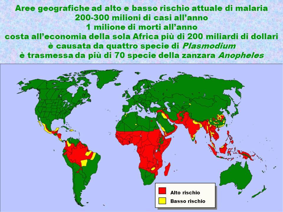 Aree geografiche ad alto e basso rischio attuale di malaria 200-300 milioni di casi all'anno 1 milione di morti all'anno costa all'economia della sola Africa più di 200 miliardi di dollari è causata da quattro specie di Plasmodium è trasmessa da più di 70 specie della zanzara Anopheles