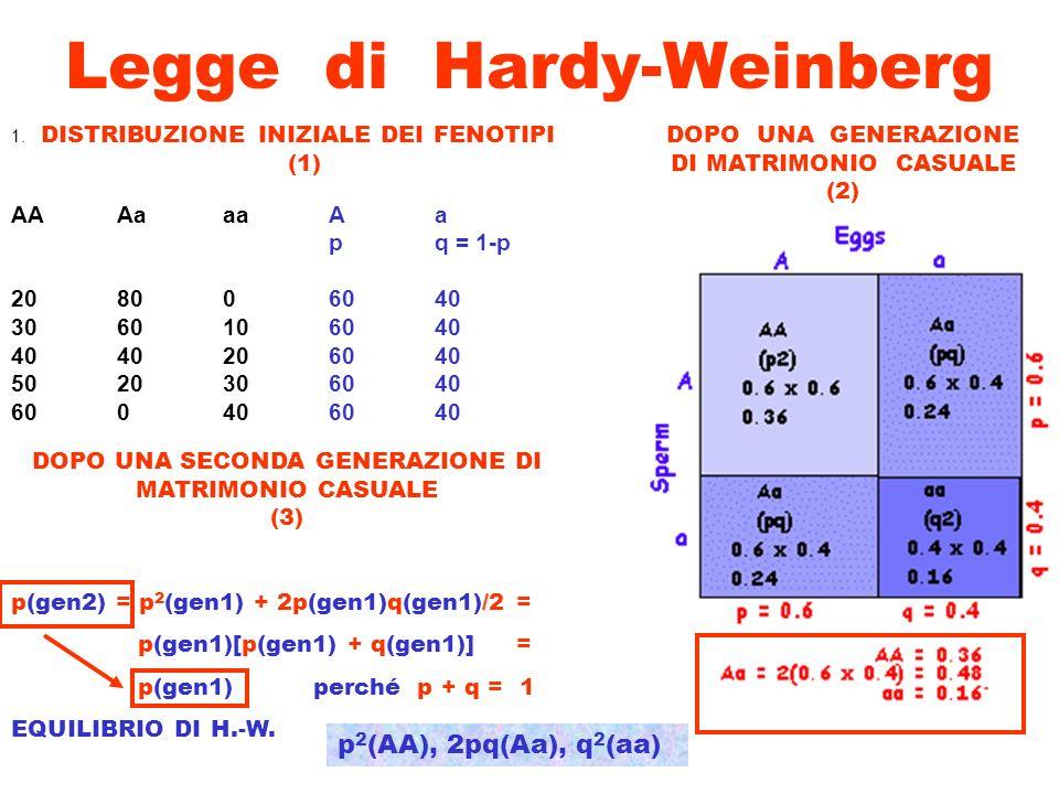 Legge di Hardy-Weinberg