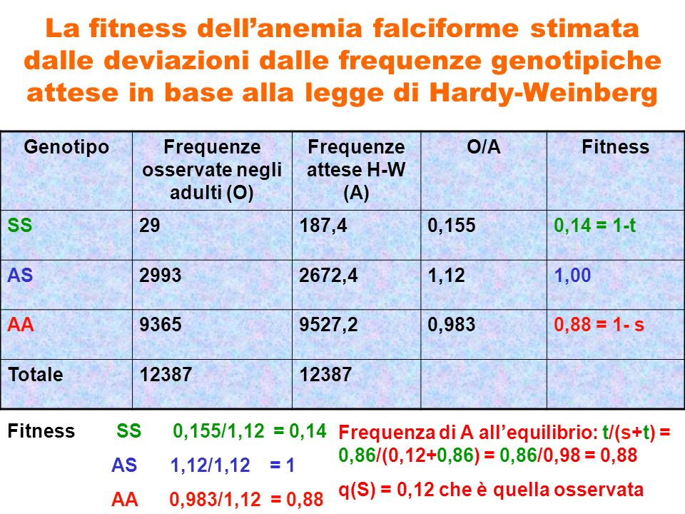Frequenze osservate negli adulti (O) Frequenze attese H-W (A)