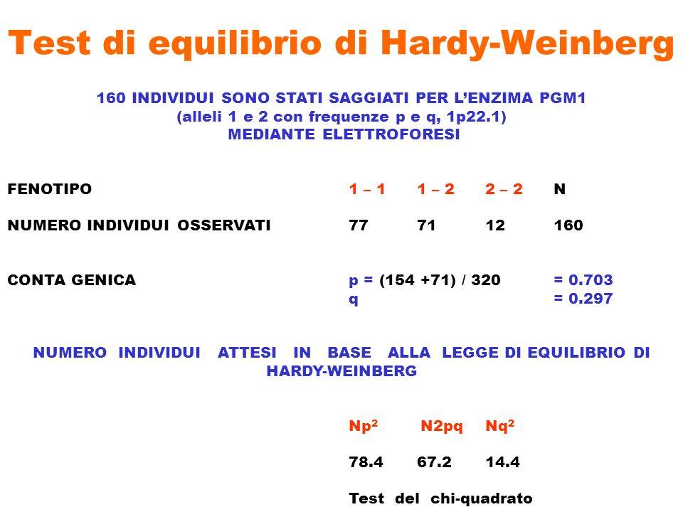 Test di equilibrio di Hardy-Weinberg