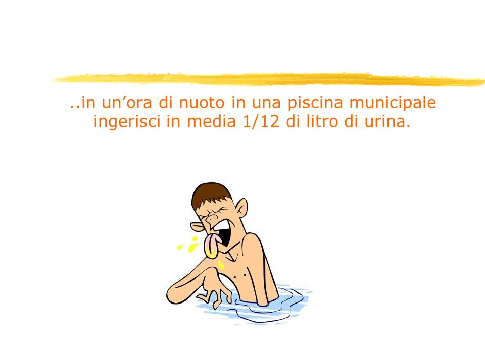 ..in un'ora di nuoto in una piscina municipale ingerisci in media 1/12 di litro di urina.