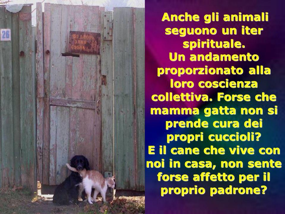Anche gli animali seguono un iter spirituale.