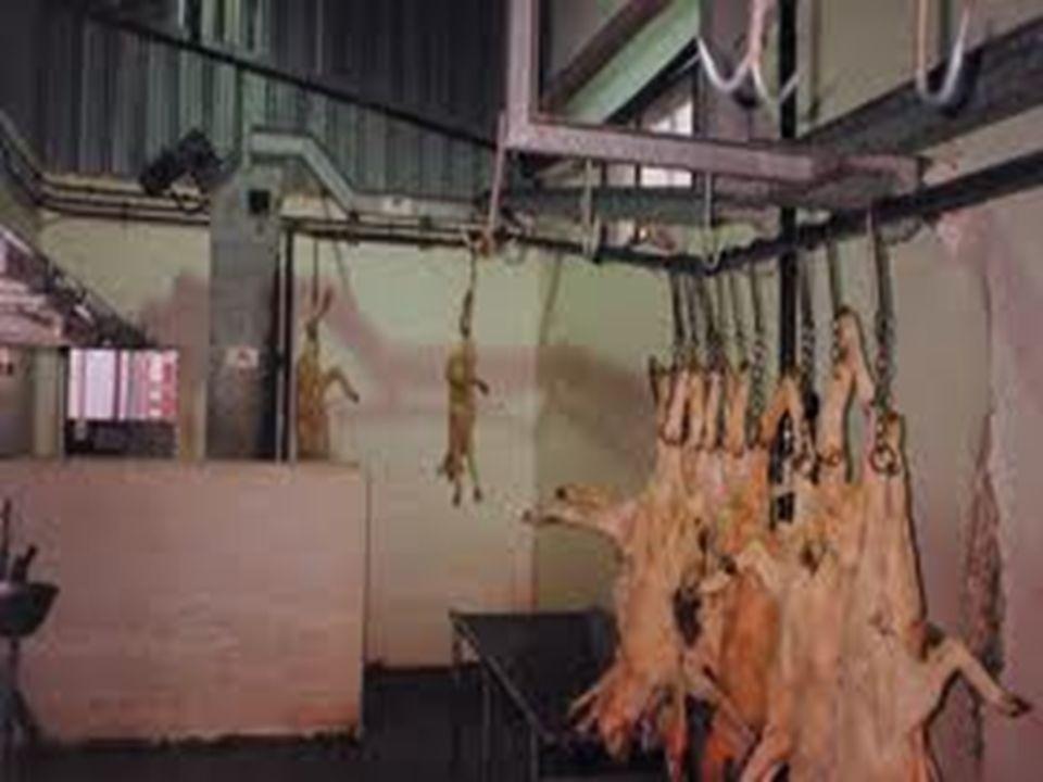 Che pensare del vegetarianesimo