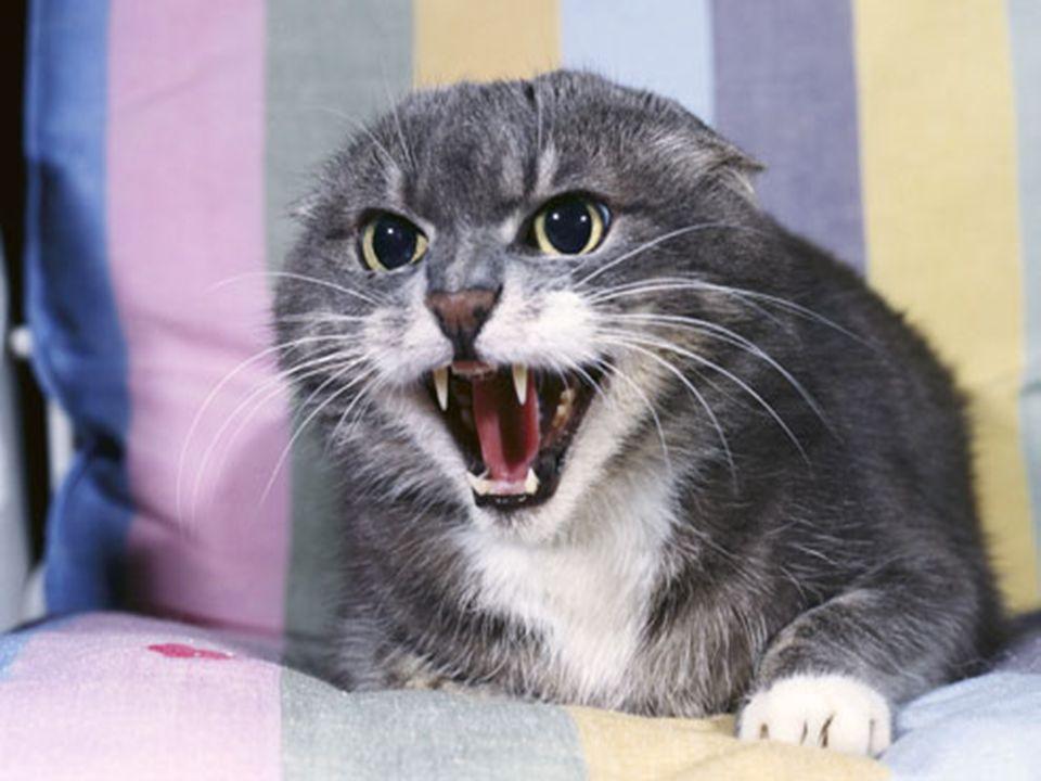Il gatto stesso non è direttamente responsabile di questo fatto.