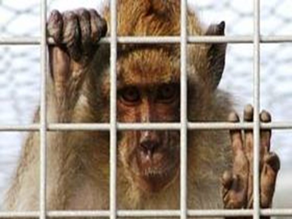 L uomo è spesso meno esigente con se stesso che con gli animali con i quali vive.