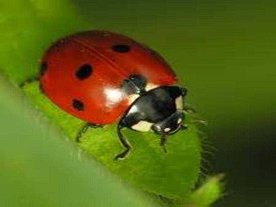 Come dobbiamo comportarci con gli insetti cosiddetti nocivi, nel contesto quotidiano Dobbiamo subire le loro invasioni con la scusa che hanno un anima, per quanto collettiva