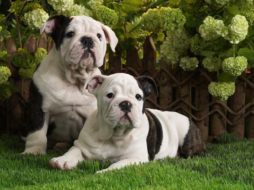 Articolo 1Tutti gli animali nascono uguali davanti alla vita ed hanno gli stessi diritti all esistenza.