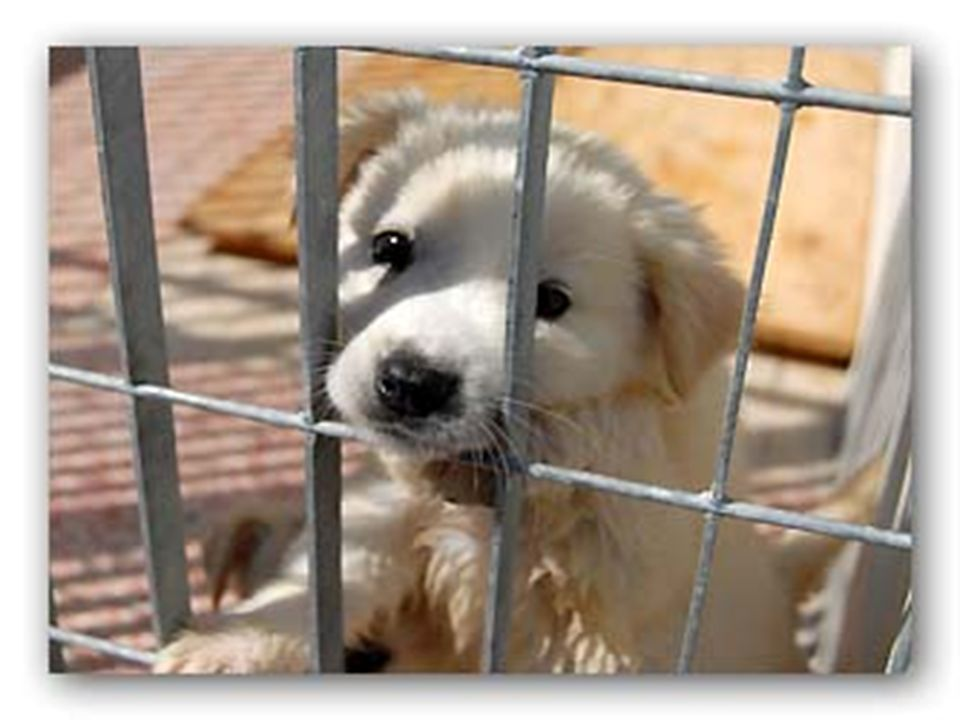 Ci siamo mai veramente tuffati nello sguardo, negli occhi di un cane, di un animale